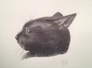 I drew my cat